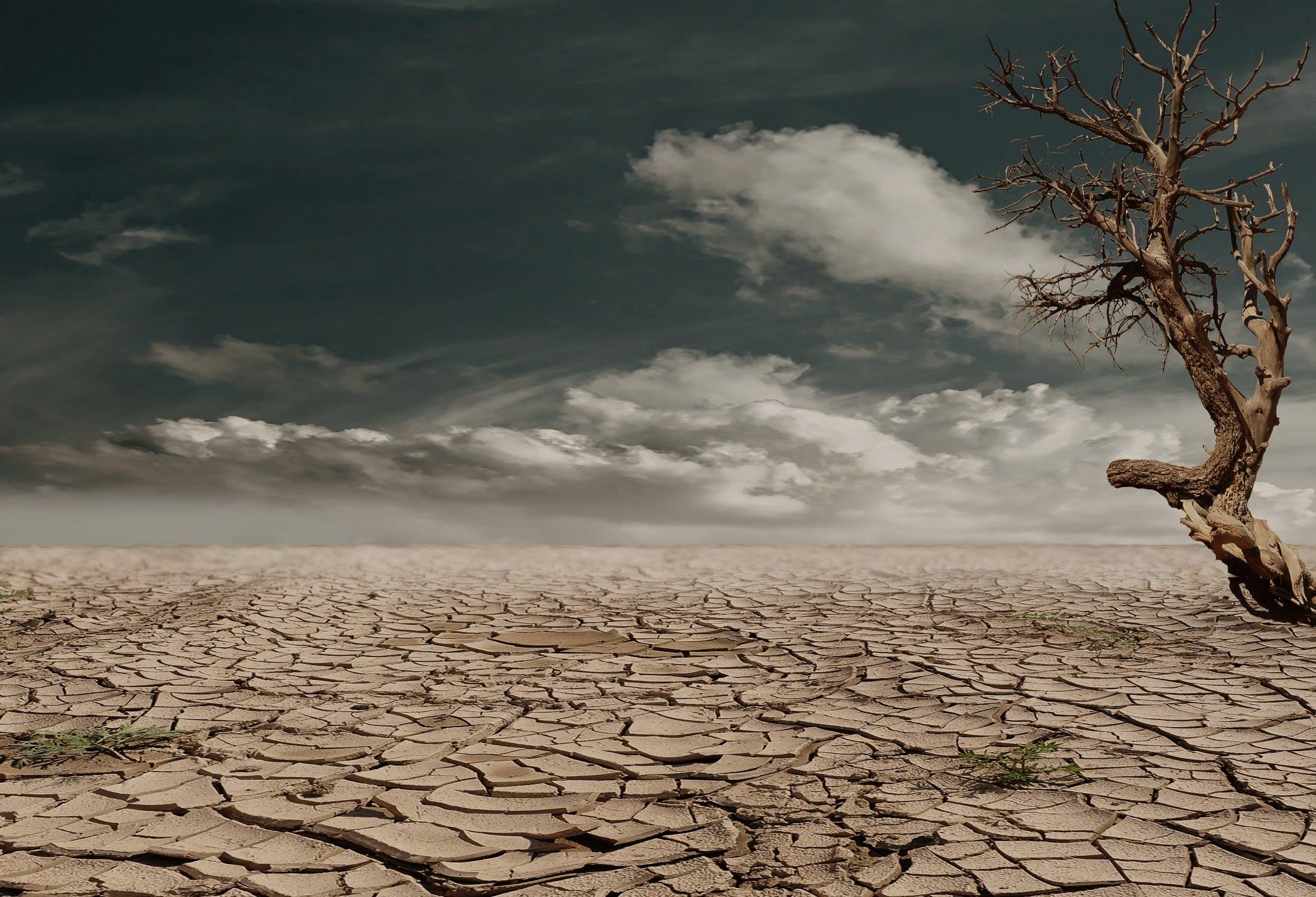 Dashboard Week Day 4 – US Drought Data